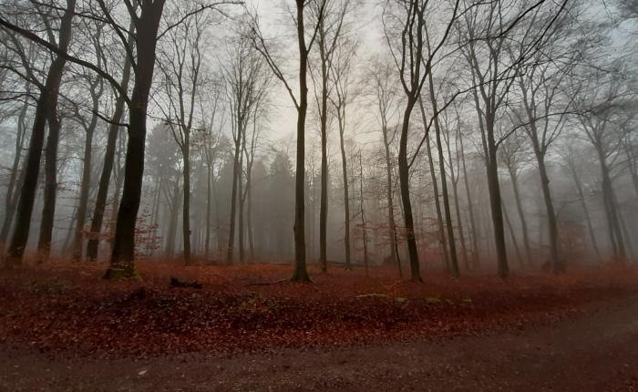 Neujahrs-Spaziergang (Wanderung)